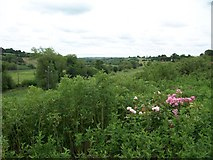 N9673 : View downstream along the Boyne Valley from near the Slane Bridge by Eric Jones