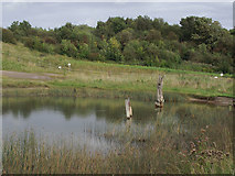 SJ6575 : Pool in Anderton Nature Park, Cheshire by Roger  Kidd