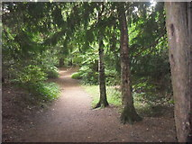 SP4802 : Path through Jarn Mound wild garden by andrew auger
