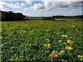 NZ3429 : Wild flower meadow near Temple of Minerva, Hardwick Hall Country Park by Andrew Curtis