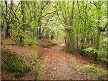 NS0964 : Woodland path by Callum Black