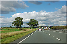 SE4285 : Trees by the A19 by Robin Webster