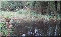 TQ5781 : Long Pond by Roger Jones