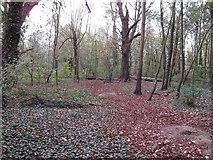 TQ5781 : Narrow glade in Ash Plantation by Roger Jones