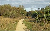 TQ5781 : Oak Wood path by Roger Jones