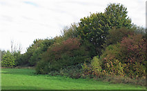 TQ5782 : Early autumn colours on field boundary by Roger Jones