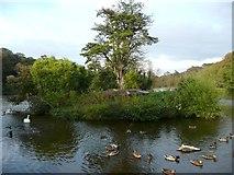 NS2209 : The Duck House Island, Culzean by Humphrey Bolton