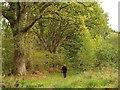 SX7979 : Blackmoor Copse by Derek Harper