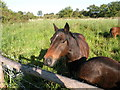 """TL2285 : """"... and the barman says 'Why the long face?'"""" by Keith Edkins"""
