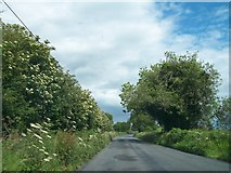 N5977 : The Balrath to Patrickstown Road by Eric Jones
