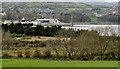 D4202 : Hedges and fields, Islandmagee by Albert Bridge