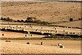 NT6236 : Farmland at New Smailholm by Walter Baxter