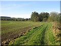 SE5977 : Field headland by winter wheat crop by Pauline E