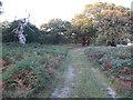 TM3550 : Footpath through Staverton Park by Roger Jones