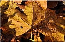 J3875 : Autumn leaves, Belfast by Albert Bridge