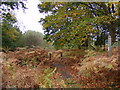TM3855 : Footpath into Tunstall Forest by Adrian Cable