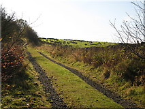NY6565 : Track towards Todholes by Mike Quinn