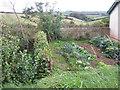SX8352 : Fruit and vegetable garden, 'Sidboro'  by Robin Stott