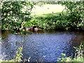 NN8831 : River Almond near Newton by nick macneill