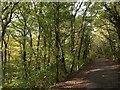 SX5259 : Plym Valley Trail by Derek Harper