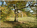 TL4953 : Autumn in Wandlebury Country Park by Marathon