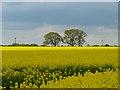 SU2990 : Farmland, Uffington by Andrew Smith