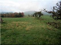 SE0950 : Rough Pasture behind Chapel House by Chris Heaton
