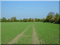 SU3788 : Farmland, West Challow by Andrew Smith