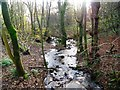 NS5576 : Mugdock Wood by Robert Murray