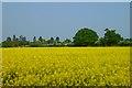 SU9277 : Farmland, Bray by Andrew Smith