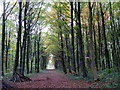 SK5278 : Autumnal woodland scene, Whitwell Wood by Andrew Hill