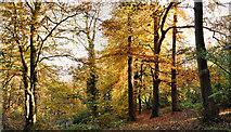 J4681 : Autumn leaves, Crawfordsburn Country Park (3) by Albert Bridge