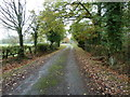 TQ0437 : Wey South Path approaching Great Garson by Dave Spicer