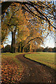SK4833 : Autumn poplars in West Park by David Lally