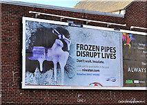 J3674 : Frozen pipes poster, Belfast by Albert Bridge
