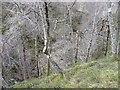 NN7957 : The gorge of Allt Tarruinchon by Russel Wills