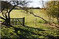 SO6466 : Gate on a footpath near Highwood by Philip Halling
