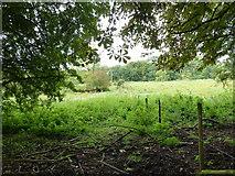SU6017 : South Downs Society Green Travel Walks Week (161) by Basher Eyre