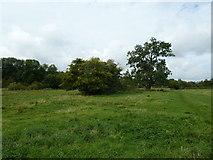 SU6017 : South Downs Society Green Travel Walks Week (163)   by Basher Eyre
