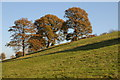 SO6865 : Trees in farmland near Hanley William by Philip Halling