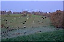 SK1971 : Early Morning Fields near Parkfield by Mick Garratt