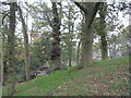 SJ6069 : A prominent wooded mound beside Dalefords Lane by Dr Duncan Pepper