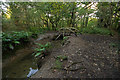 SW6032 : Leat, Godolphin Woods by Ian Capper