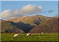 NS9195 : Farmland near Coalsnaughton by William Starkey