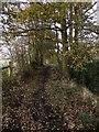 SJ9482 : Footpath, Poynton Coppice by David Dixon