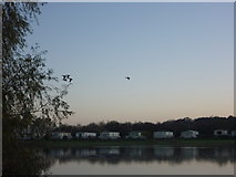 NT6578 : Rural East Lothian : 4+1 At Seafield Pond, Belhaven by Richard West