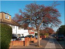 TQ1372 : London Loop, Staines Road by Des Blenkinsopp