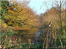 TQ1272 : The Mill Stream, Crane Park by Des Blenkinsopp