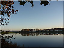 NT6578 : Coastal East Lothian : An Autumn Morning at Seafield Pond, Belhaven by Richard West
