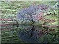NG4163 : Reflections on a still Lochan Mor Rhugh by Dave Fergusson